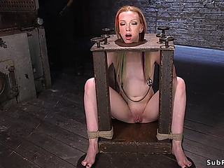 Humid Crack toyed in hogtie suspension